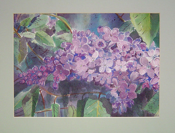 Lilacs by Mary Stewart Rose